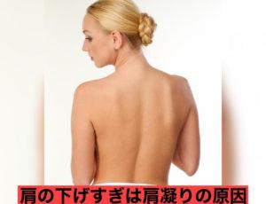 肩甲骨の正しい位置✨